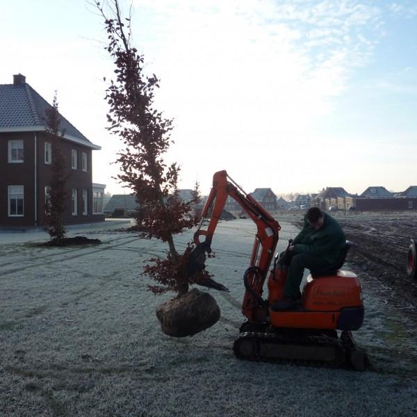Bomen planten 3