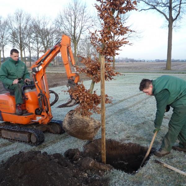 Bomen planten 4