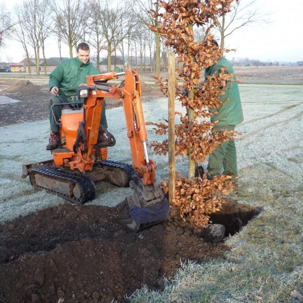 Bomen planten 6